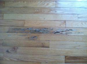 water damage, hardwood-floor
