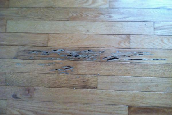 Hardwood Floor Preservation: Water Damage